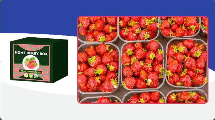 Home Berry Box ¿Cómo funciona?